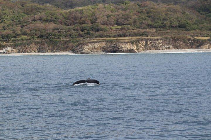 la lancha whales